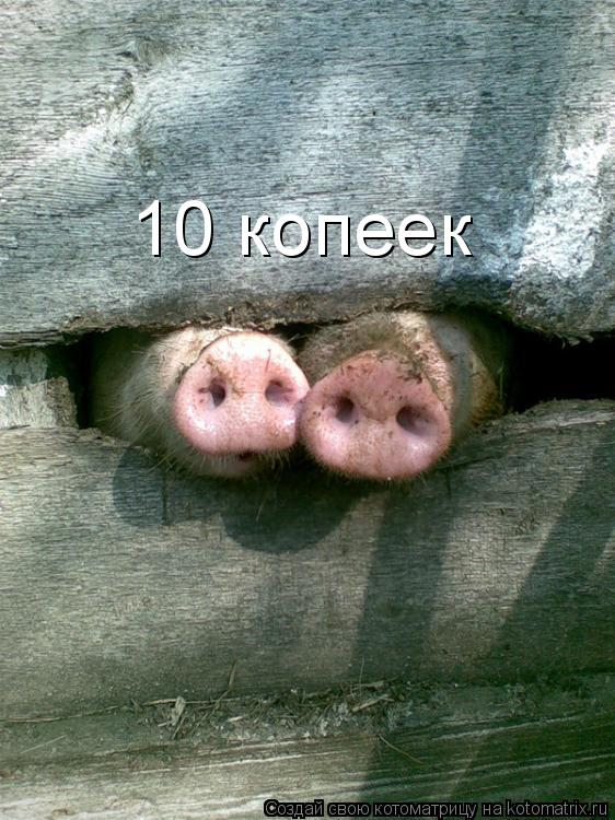Котоматрица: 10 копеек