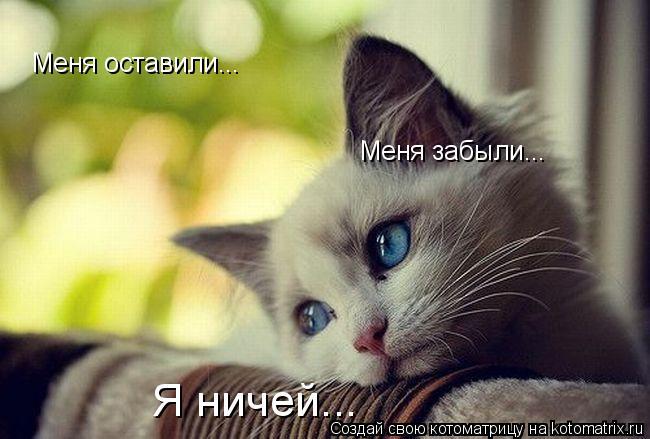 Котоматрица: Меня оставили... Меня забыли... Я ничей...