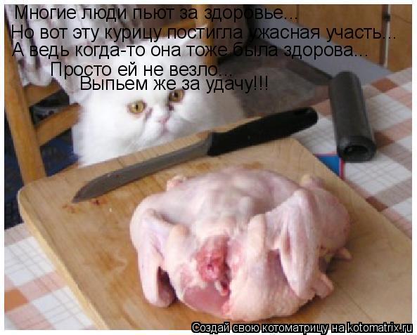 Котоматрица: Многие люди пьют за здоровье... Но вот эту курицу постигла ужасная участь... А ведь когда-то она тоже была здорова... Просто ей не везло... Выпье