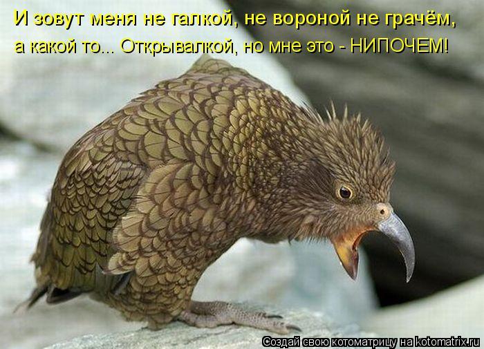 И зовут меня не галкой, не вороной не грачём, а какой то... Открывалко