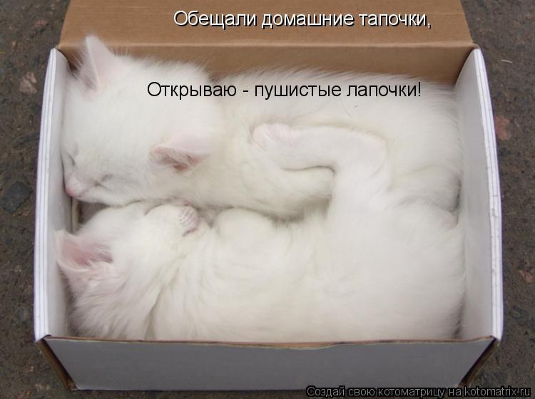 Котоматрица: Обещали домашние тапочки, Открываю - пушистые лапочки!