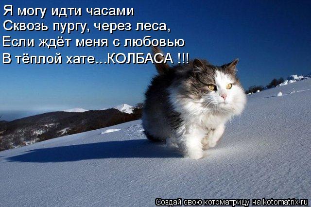 Котоматрица: Я могу идти часами  Сквозь пургу, через леса, Если ждёт меня с любовью В тёплой хате...КОЛБАСА !!!