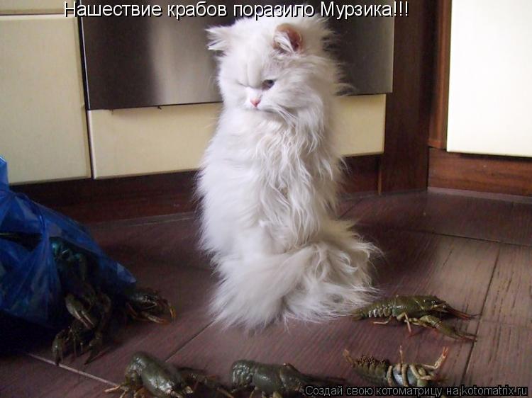 Котоматрица: Нашествие крабов поразило Мурзика!!!
