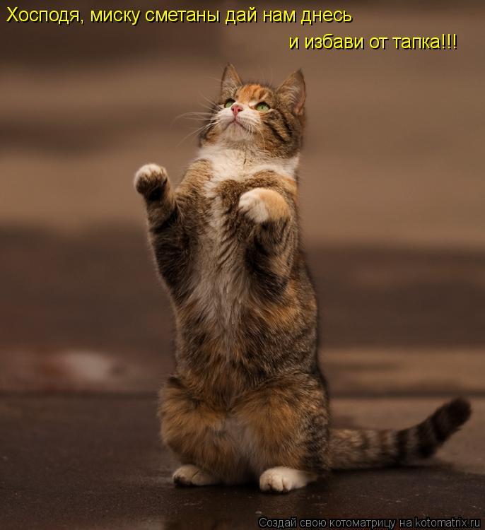 Котоматрица: Хосподя, миску сметаны дай нам днесь и избави от тапка!!!