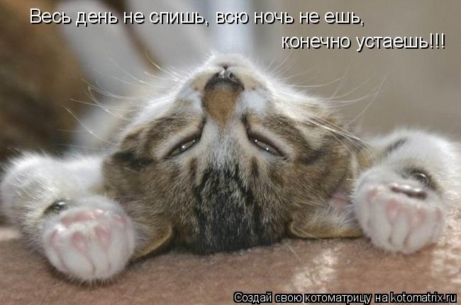 Котоматрица: Весь день не спишь, всю ночь не ешь, конечно устаешь!!! Весь день не спишь, всю ночь не ешь,  конечно устаешь!!!