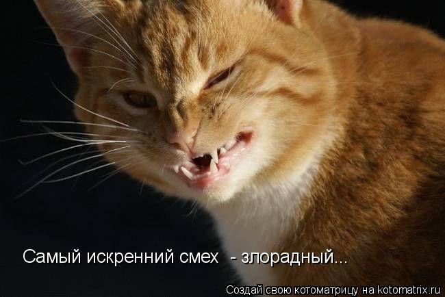 Котоматрица: Самый искренний смех  - злорадный...