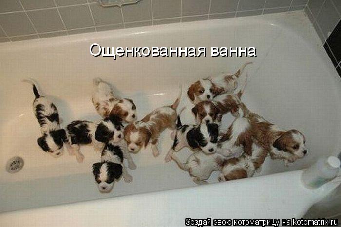 Ощенкованная ванна