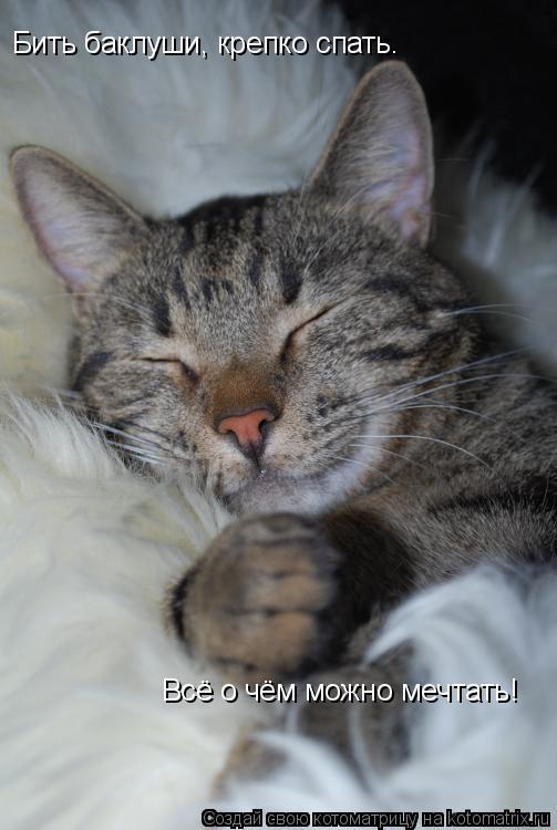 Котоматрица: Бить баклуши, крепко спать.  Всё о чём можно мечтать!