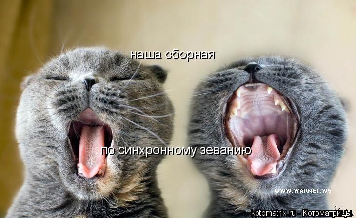 Котоматрица: наша сборная по синхронному зеванию наша сборная