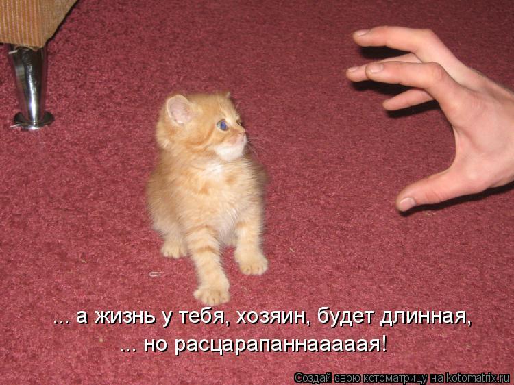 Котоматрица: ... а жизнь у тебя, хозяин, будет длинная, ... но расцарапаннааааая!