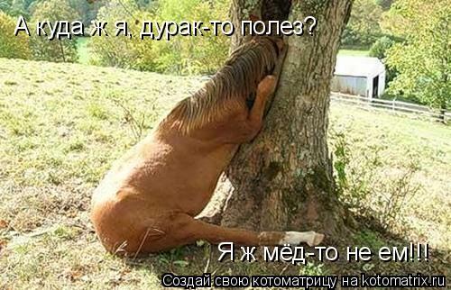 Котоматрица: Я ж мёд-то не ем!!! А куда ж я, дурак-то полез?