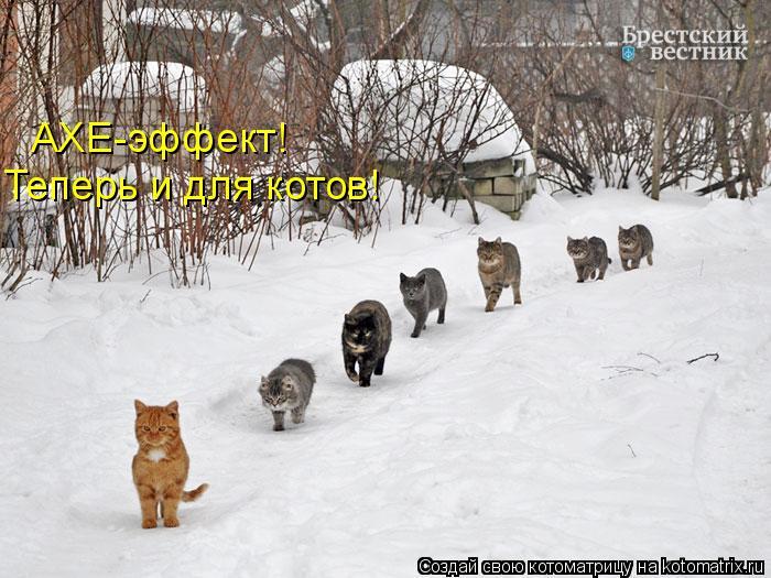 Котоматрица: AXE-эффект! Теперь и для котов!