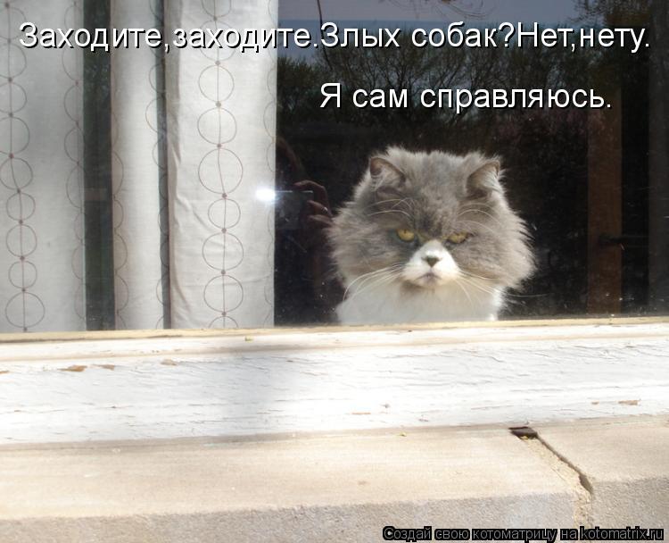 Заходите,заходите.Злых собак?Нет,нету. Я сам справляюсь.