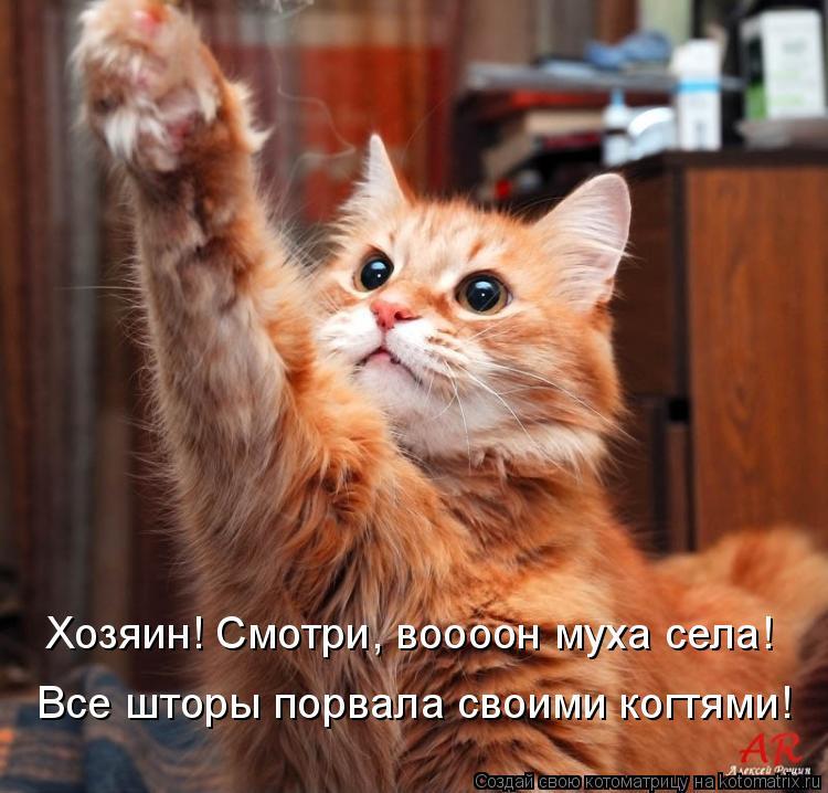Котоматрица: Хозяин! Смотри, воооон муха села!  Все шторы порвала своими когтями!