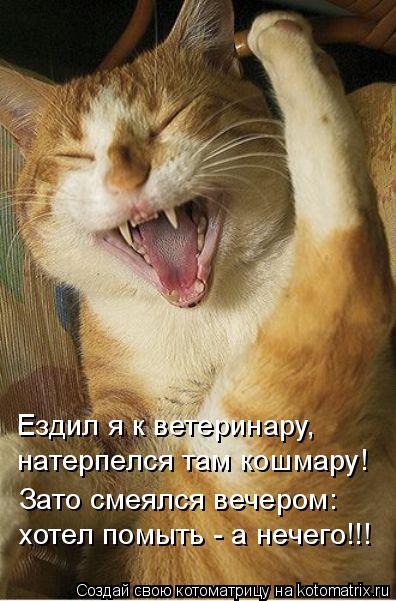 Котоматрица: Ездил я к ветеринару, натерпелся там кошмару! Зато смеялся вечером: хотел помыть - а нечего!!!