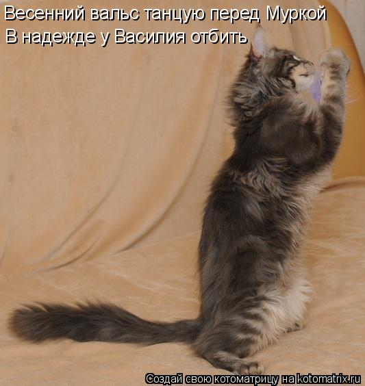 Весенний вальс танцую перед Муркой В надежде у Василия отбить