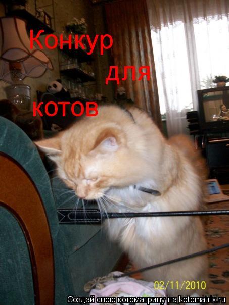 Котоматрица: Конкур для котов