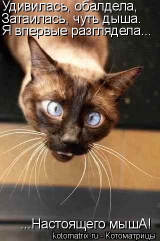 Котоматрица: Удивилась, обалдела, Затаилась, чуть дыша. Я впервые разглядела... ...Настоящего мышА!