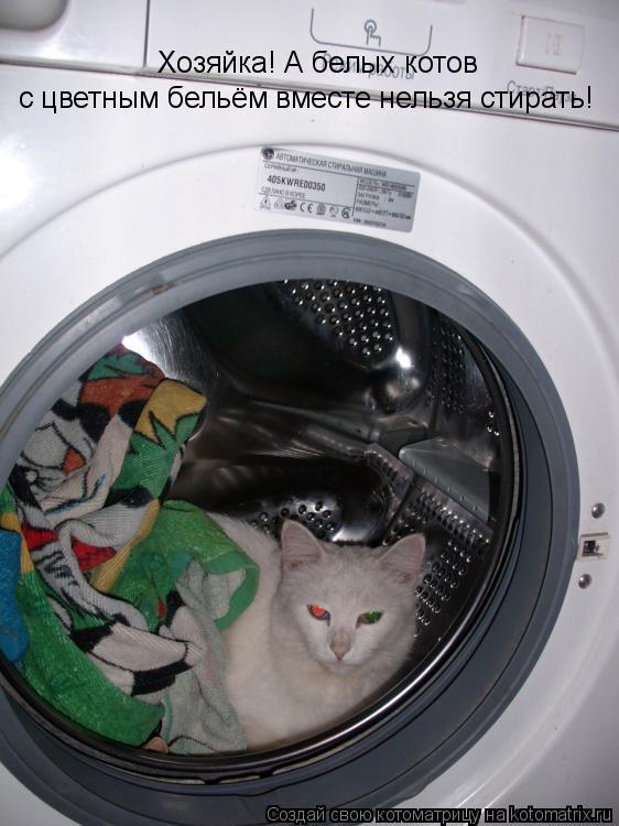 Котоматрица: Хозяйка! А белых котов  с цветным бельём вместе нельзя стирать!