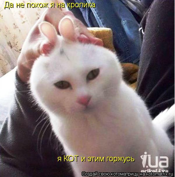 Котоматрица: Да не похож я на кролика я КОТ и этим горжусь