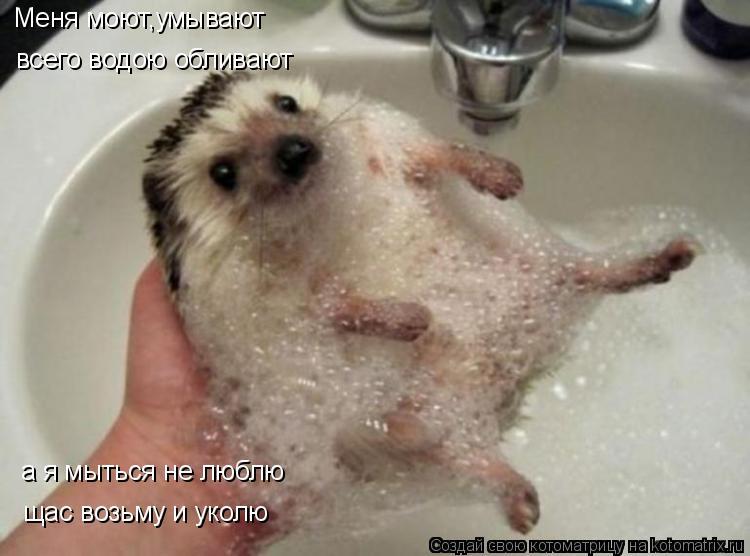 Котоматрица: Меня моют,умывают всего водою обливают а я мыться не люблю щас возьму и уколю