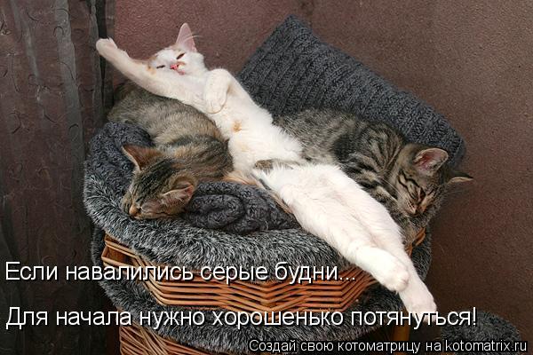 Котоматрица: Если навалились серые будни... Для начала нужно хорошенько потянуться!
