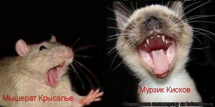 Котоматрица: Мурзик Кисков Мышерат Крысалье