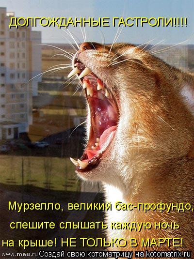 Котоматрица: Мурзелло, великий бас-профундо, ДОЛГОЖДАННЫЕ ГАСТРОЛИ!!!! спешите слышать каждую ночь на крыше! НЕ ТОЛЬКО В МАРТЕ!
