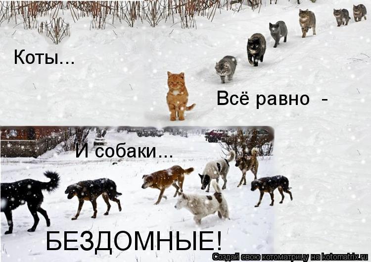Котоматрица: Коты... И собаки... Всё равно  -  Всё равно  -  БЕЗДОМНЫЕ!