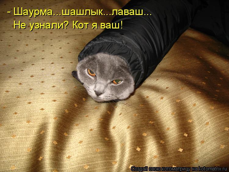- Шаурма...шашлык...лаваш... Не узнали? Кот я ваш!