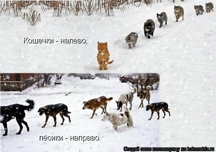 Котоматрица: Кошечки - налево, пёсики - направо.