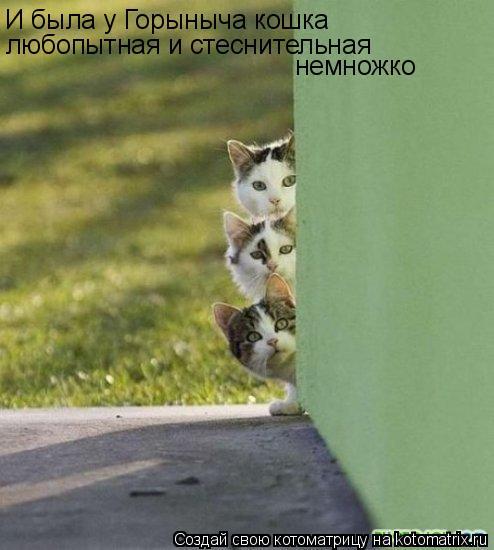 И была у Горыныча кошка любопытная и стеснительная немножко