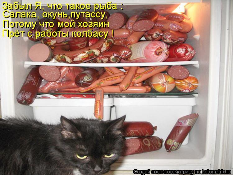Котоматрица: Салака, окунь,путассу, Потому что мой хозяин Прёт с работы колбасу ! Забыл Я, что такое рыба :