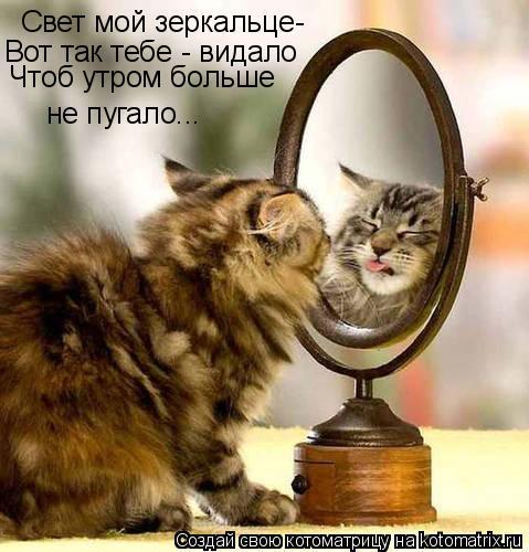 Котоматрица: Свет мой зеркальце- Вот так тебе - видало Чтоб утром больше не пугало...