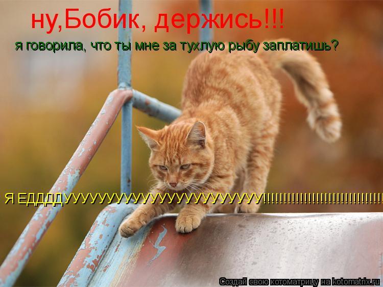 Котоматрица: ну,Бобик, держись!!!  Я ЕДДДДУУУУУУУУУУУУУУУУУУУУУУУ!!!!!!!!!!!!!!!!!!!!!!!!!!!!!!!!! я говорила, что ты мне за тухлую рыбу заплатишь?