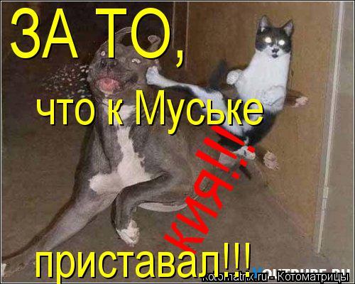 Котоматрица: кия!!! ЗА ТО, что к Муське приставал!!!