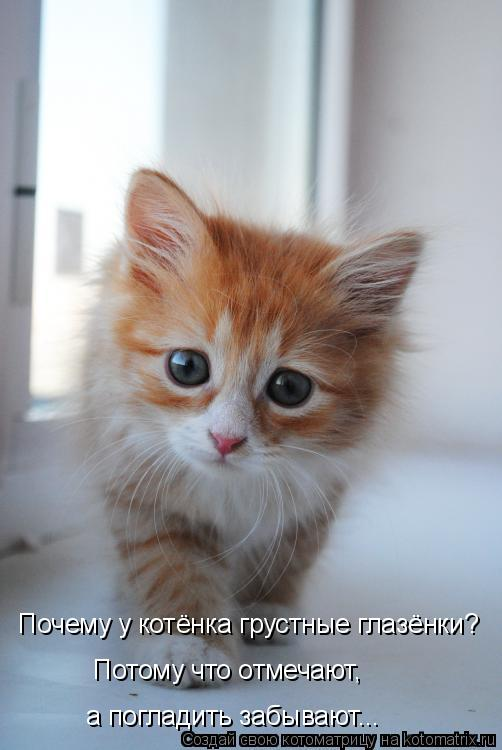 Котоматрица: Почему у котёнка грустные глазёнки? Потому что отмечают,  а погладить забывают...