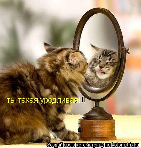 Котоматрица: ты такая уродливая!!!