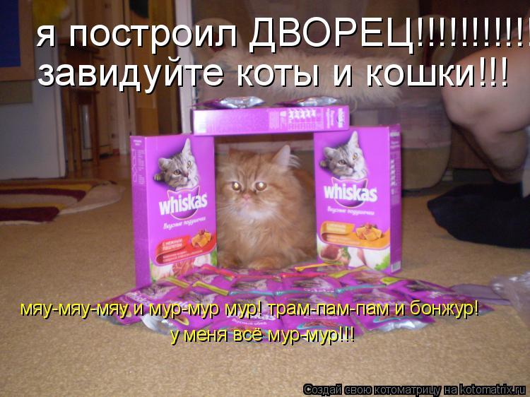 Котоматрица: я построил ДВОРЕЦ!!!!!!!!!!!!!!!!! завидуйте коты и кошки!!! мяу-мяу-мяу и мур-мур мур! трам-пам-пам и бонжур! у меня всё мур-мур!!!