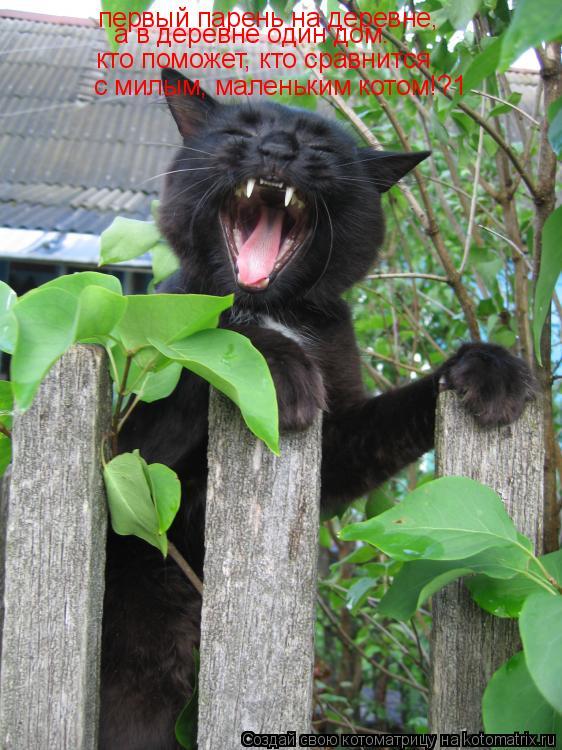 Котоматрица: первый парень на деревне, а в деревне один дом. кто поможет, кто сравнится с милым, маленьким котом!?1