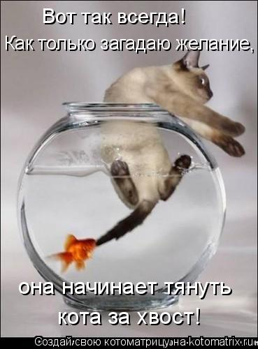 Котоматрица: Вот так всегда! кота за хвост! она начинает тянуть Как только загадаю желание,