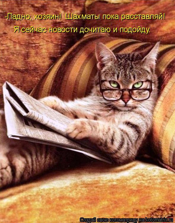 Котоматрица: -Ладно, хозяин!  Шахматы пока расставляй! Я сейчас новости дочитаю и подойду.
