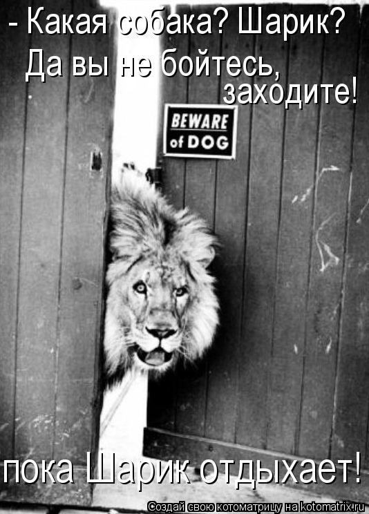 Котоматрица: - Какая собака? Шарик? Да вы не бойтесь,  заходите!  пока Шарик отдыхает!