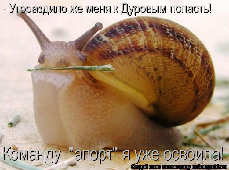 """Котоматрица: - Угораздило же меня к Дуровым попасть! Команду  """"апорт"""" я уже освоила!"""