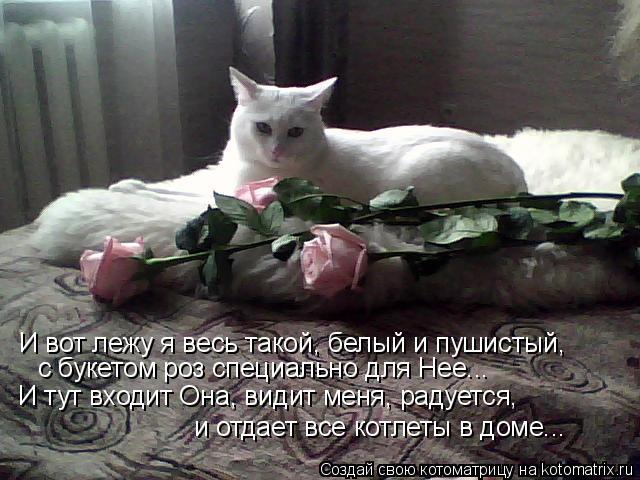 Котоматрица: И вот лежу я весь такой, белый и пушистый, с букетом роз специально для Нее... И тут входит Она, видит меня, радуется, и отдает все котлеты в дом