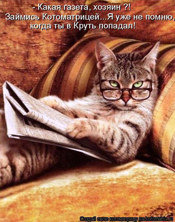 Котоматрица: - Какая газета, хозяин ?! Займись Котоматрицей...Я уже не помню, когда ты в Круть попадал!
