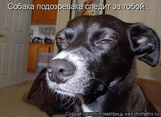 Котоматрица: Собака подозревака следит за тобой...