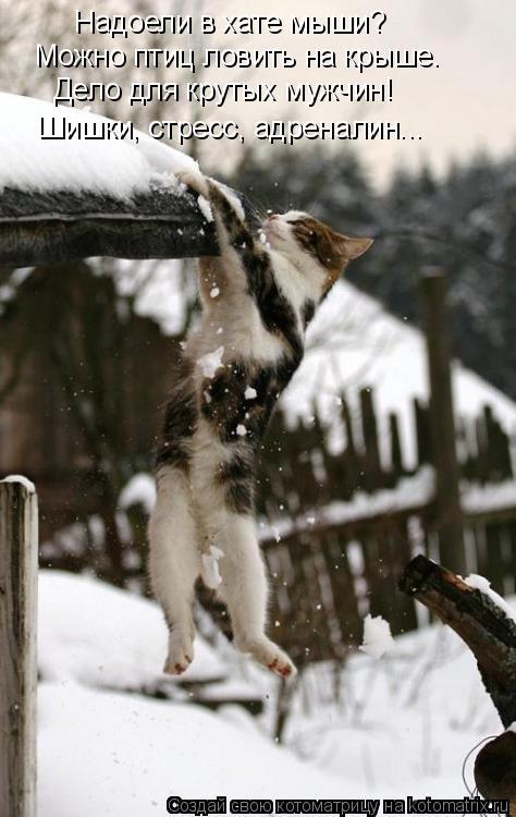 Котоматрица: Надоели в хате мыши? Можно птиц ловить на крыше. Дело для крутых мужчин! Шишки, стресс, адреналин...