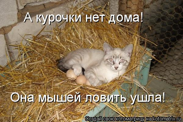 А курочки нет дома! Она мышей ловить ушла!