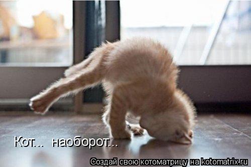 Котоматрица: Кот...  наоборот...